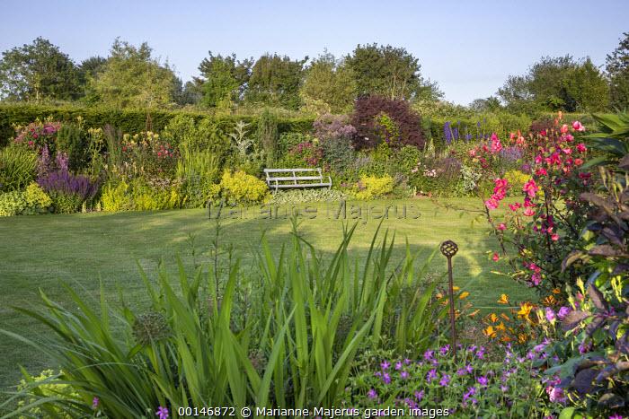 View across lawn to bench in cottage garden border, cotinus, Alchemilla mollis, roses, salvia, heuchera, geraniums, euphorbia