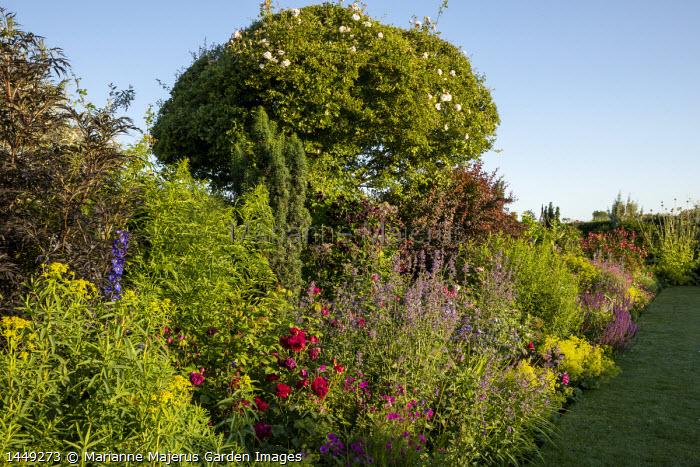Cottage garden border, cotinus, Alchemilla mollis, roses, salvia, heuchera, geraniums, Euphorbia palustris, Sambucus nigra 'Black Lace'