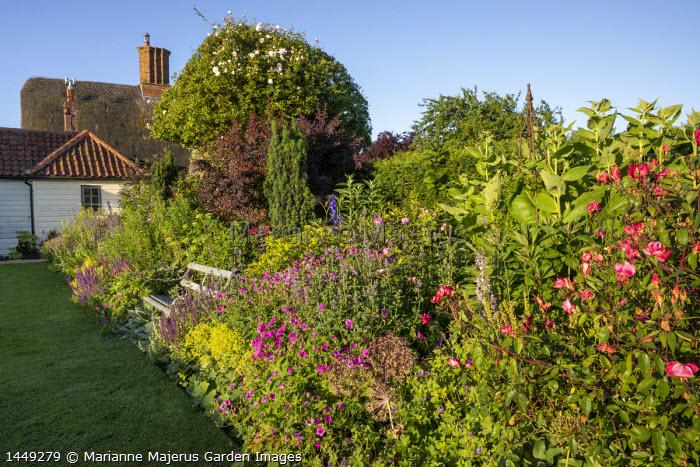 Bench in cottage garden border, cotinus, Alchemilla mollis, Rosa × odorata 'Mutabilis', salvia, heuchera, geraniums, euphorbia