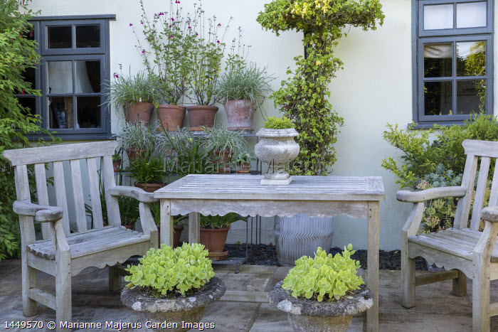 Wooden chairs and table on stone patio by house, Hylotelephium spectabile 'Iceberg' syn. sedum in stone pots, salvia and agapanthus in terracotta pots on shelving