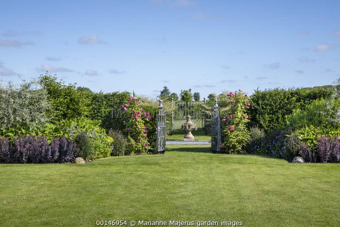 View across lawn to wrought-iron metal gates in yew hedge, sedum, geranium, persicaria, Rosa 'Sir Paul Smith'