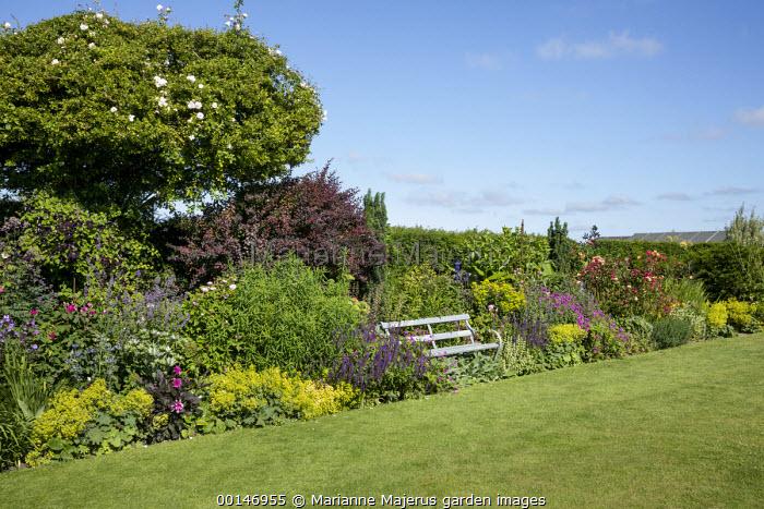 Bench in cottage garden border, cotinus, Alchemilla mollis, roses, salvia, heuchera, geraniums, euphorbia