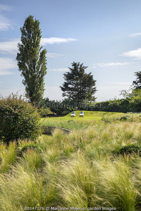 View across drift of Stipa tenuissima interspersed with Buxus sempervirens to chairs on lawn