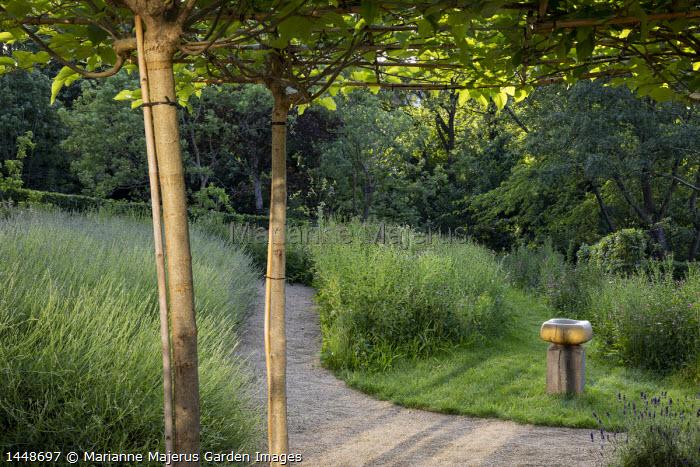 Gravel path, Centaurea nigra in wildflower meadow, bird bath by Sarah Walton, drift of lavender, umbrella trained mulberry tree