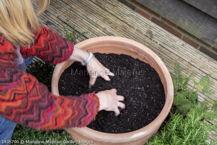 Woman loosening soil in large terracotta pot in preparation for herb planting