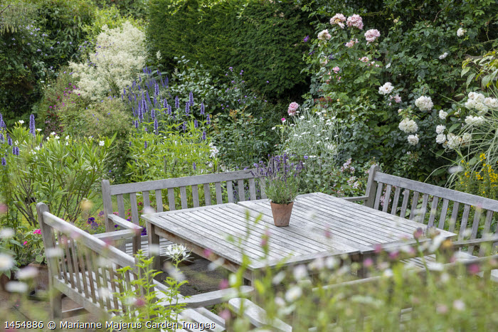 Wooden benches around table on patio, umbrella, Agastache 'Blackadder', Rosa 'Alba Maxima' and 'Sharifa Asma', Nerium oleander, Lychnis coronaria 'Alba'