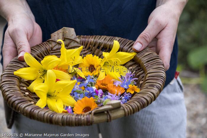 Freshly harvested edible flowers, hemerocallis, borage, marigold