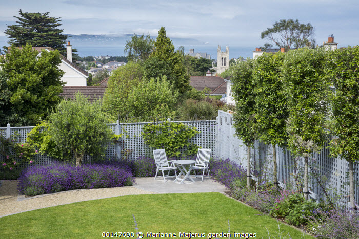 Blue painted trellis fence, salvia, table and chairs on patio, olive tree underplanted with lavender