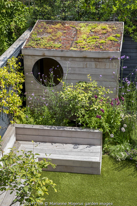 Contemporary family courtyard garden, astroturf lawn, built-in timber benches, wooden playhouse with living green roof, Verbena bonariensis