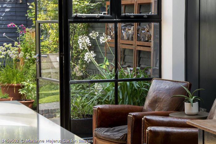 View from chairs inside house to contemporary family courtyard garden outside, black painted fence, log storage, alliums in container, agapanthus