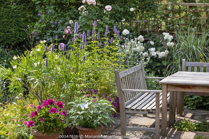 Wooden benches around table on patio, agastache, Regal Pelargonium 'Burghi', Rosa 'Alba Maxima' and 'Sharifa Asma'