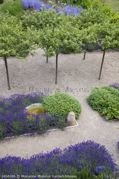 Umbrella-trained Malus sylvestris, Lavandula angustifolia 'Hidcote', Salvia officinalis, self-binding gravel