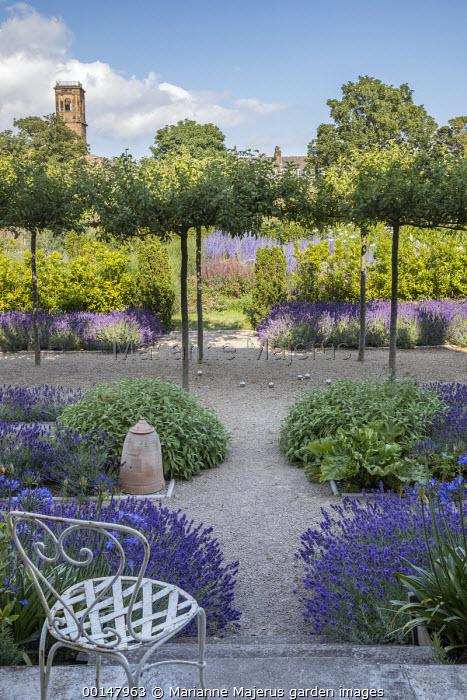 Umbrella-trained Malus sylvestris, Lavandula angustifolia 'Hidcote', Salvia officinalis, self-binding gravel, white metal chair