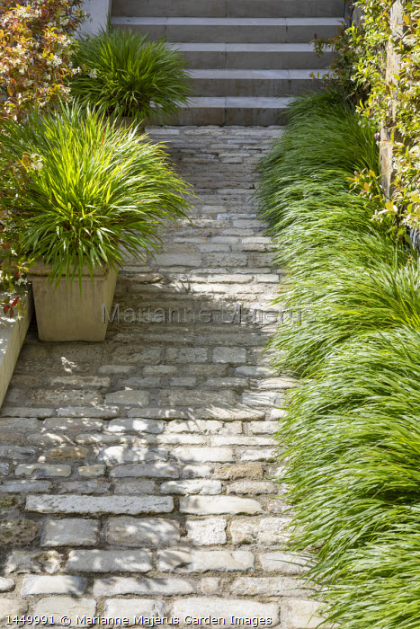 Hakonechloa macra edging stone path and in container