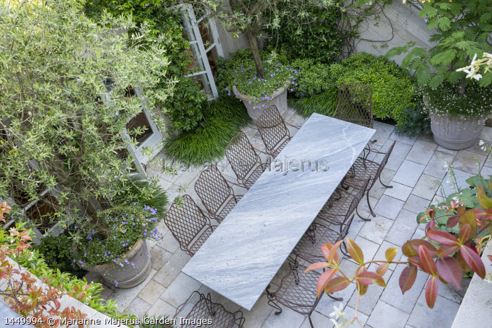 Table and chairs on French limestone patio, Olea europaea underplanted with Convolvulus sabatius in large containers, Hakonechloa macea