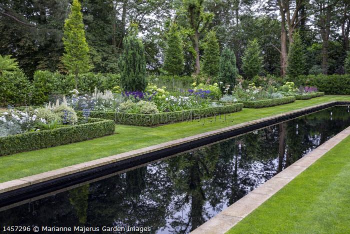 Formal reflective rectangular pool, pittosporum, eryngium, Salvia 'Amistad', lupins, leucanthemum, Taxus baccata 'Fastigiata' and agapanthus in box-edged border