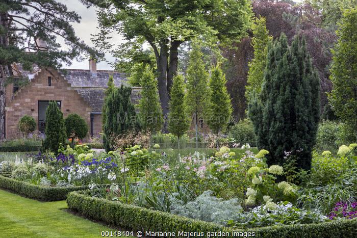 View across formal box-edged borders planted with filipendula, Hydrangea arborescens 'Annabelle', Stipa gigantea, agapanthus, Salvia 'Amistad', artemisia and Taxus baccata 'Fastigiata'
