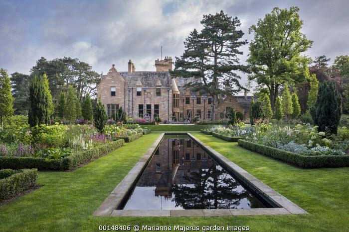 Formal rectangular pool in lawn, box-edged borders, Taxus baccata 'Fastigiata', lupins, digitalis, view to house