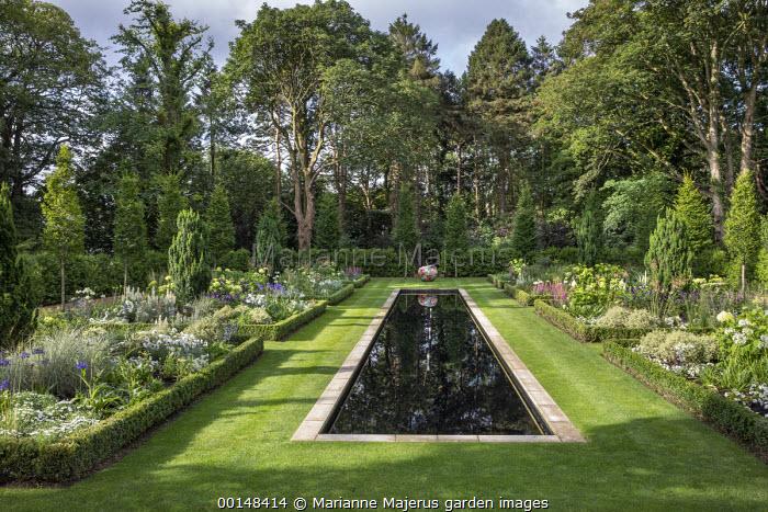 Formal rectangular pool in lawn, box-edged borders, Taxus baccata 'Fastigiata', lupins, agapanthus, digitalis, Hydrangea arborescens 'Annabelle'