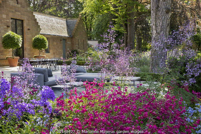 Thalictrum delavayi 'Splendide', penstemon and campanula in border by terrace, daybed and outdoor sofas, table and chairs