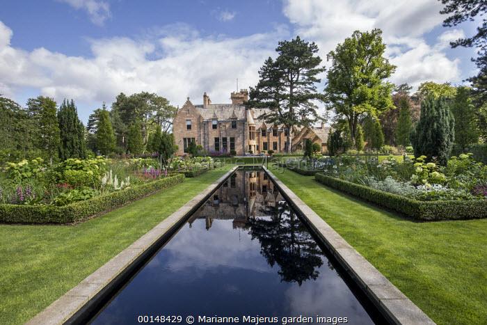 Formal rectangular pool in lawn, box-edged borders, Taxus baccata 'Fastigiata', lupins, digitalis, Hydrangea arborescens 'Annabelle', view to house