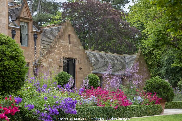 Penstemon, campanula, Thalictrum delavayi 'Splendide', Rosa 'Flower Carpet' and Polemonium 'Northern Lights' in box-edged border by house