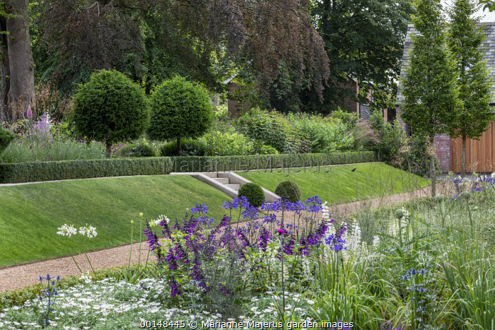 Salvia 'Amistad', agapanthus, stone steps in sloping grass bank, clipped Taxus baccata balls and lollipop standards, box-edged borders, gravel path