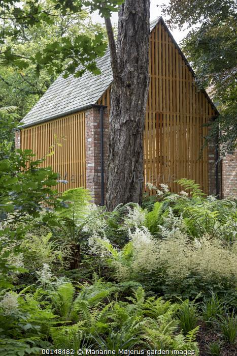 Astilbes and ferns in woodland border, Dicksonia antarctica, contemporary wooden carport