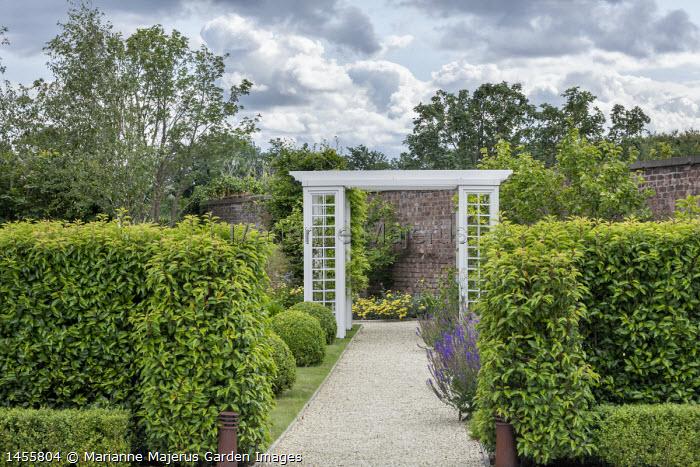 Prunus lusitanica hedge, gravel path under trellis archway, clipped box balls, achillea