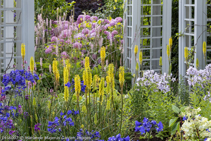 Agapanthus, Kniphofia 'Wrexham Buttercup', Campanula lactiflora, Hydrangea arborescens 'Pink Annabelle', trellis arch, Francoa sonchifolia