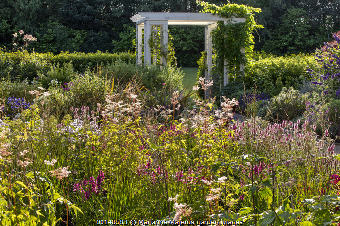 Filipendula ulmaria, Stachys officinalis, trellis arch pergolas in border