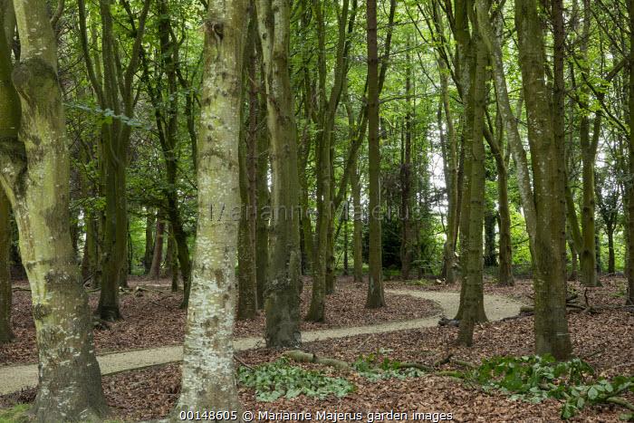 Curving path through woodland