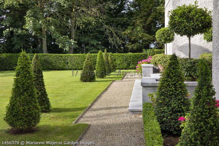 Row of clipped yew pyramids in lawn, gravel path, lollipop standard bay trees by house