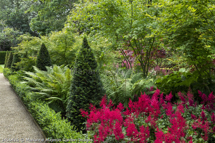 Dryopteris wallichianum, Taxus baccata yew pyramids, Acer palmatum, astilbe, low clipped box hedge