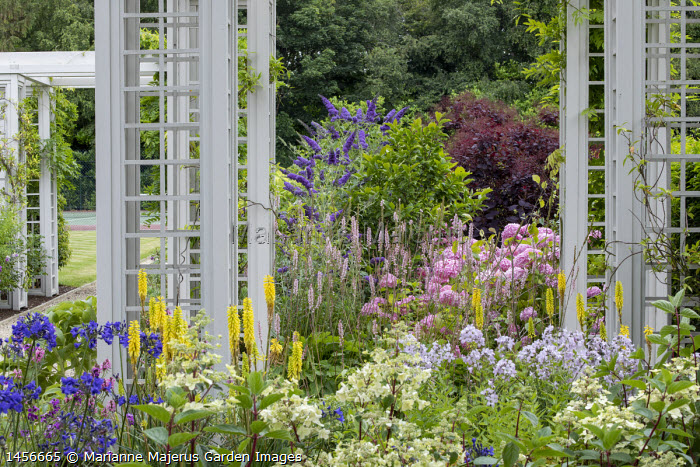Trellis pergolas, hydrangea, agapanthus, kniphofia, campanula, buddleja