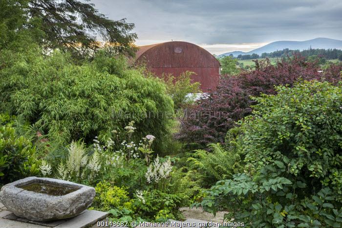The Barn Garden, stone water trough, astilbe, Astrantia major, berberis, bamboo