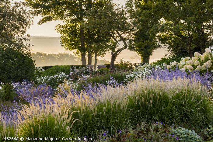 Pennisetum 'Fairy Tails', Geranium 'Brookside', Perovskia 'Blue Spire', Rosa 'Iceberg'