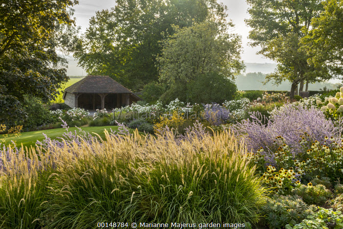 Pennisetum 'Fairy Tails', Perovskia 'Blue Spire', Echinacea purpurea 'White Swan'