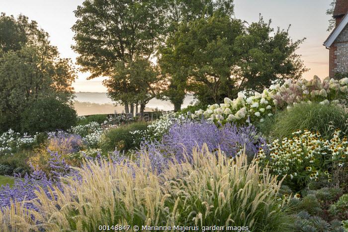 Pennisetum 'Fairy Tails', Perovskia 'Blue Spire', Rosa 'Iceberg', Echinacea purpurea 'White Swan', Hydrangea paniculata 'Little Lime'