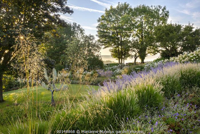 Pennisetum 'Fairy Tails', Perovskia 'Blue Spire', Rosa 'Iceberg', Geranium 'Brookside', Stipa gigantea