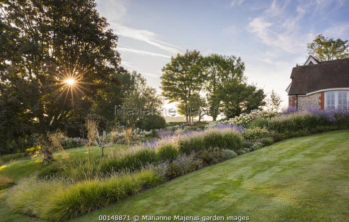 Pennisetum 'Fairy Tails', Perovskia 'Blue Spire', Geranium 'Brookside', Stipa gigantea, Sesleria autumnalis, Acer platanoides