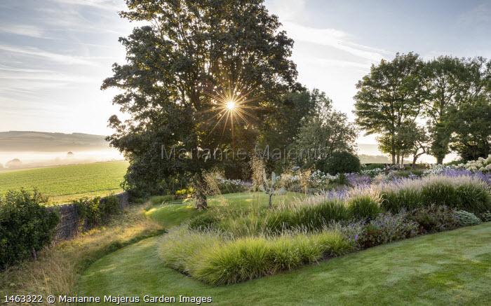 Pennisetum 'Fairy Tails', Perovskia 'Blue Spire', Geranium 'Brookside', Stipa gigantea, Sesleria autumnalis