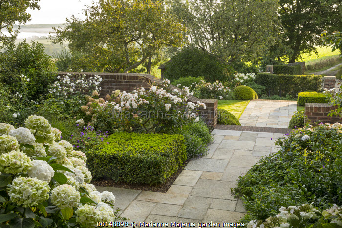 Stone path, clipped Buxus sempervirens cube, Rosa 'Penelope', hydrangea