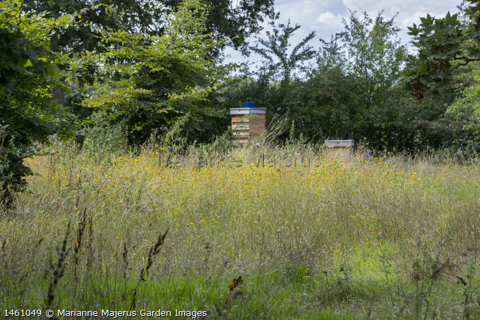 View across wildflower meadow to beehives