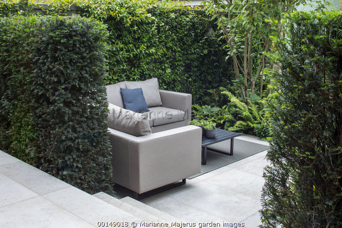 Outdoor sofas with cushions on outdoor carpet rug, yew hedge screen, garden 'room' enclosure, Trachelospermum jasminoides climbing over fence, Jura Limestone paving