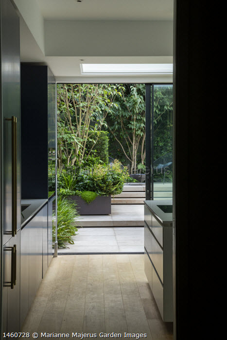View from inside contemporary kitchen to courtyard garden outside, multi-stemmed prunus in raised bed