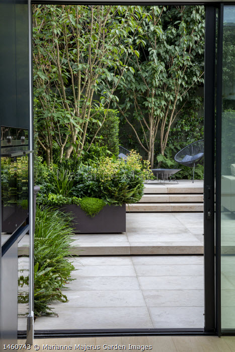 View from inside contemporary kitchen to courtyard garden outside, euphorbia and multi-stemmed prunus in raised bed