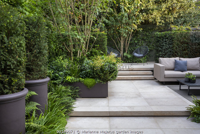 Multi-stemmed prunus in raised bed, Taxus baccata columns in pots, euphorbia, ferns, chairs on stone patio