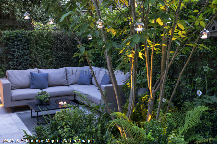Multi-stemmed prunus in raised bed, euphorbia, ferns, outdoor sofa with cushions, yew hedge, hanging candle lanterns