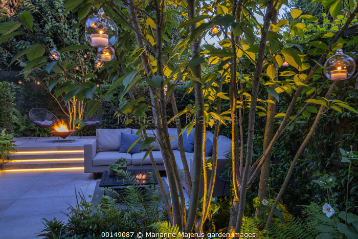 Multi-stemmed prunus, euphorbia, ferns, chairs on stone patio by brazier, outdoor sofa with cushions, hanging candle lanterns